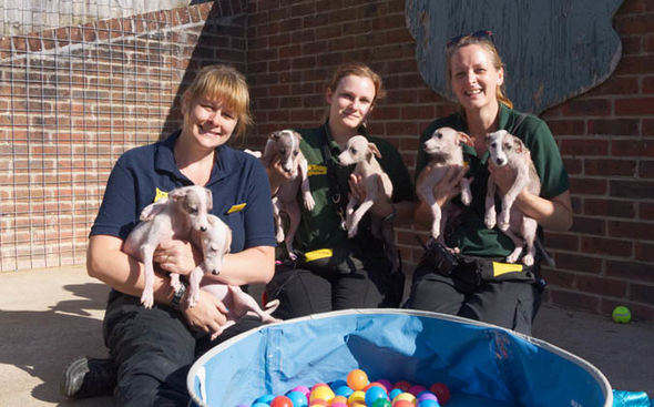 Puppies 1406397