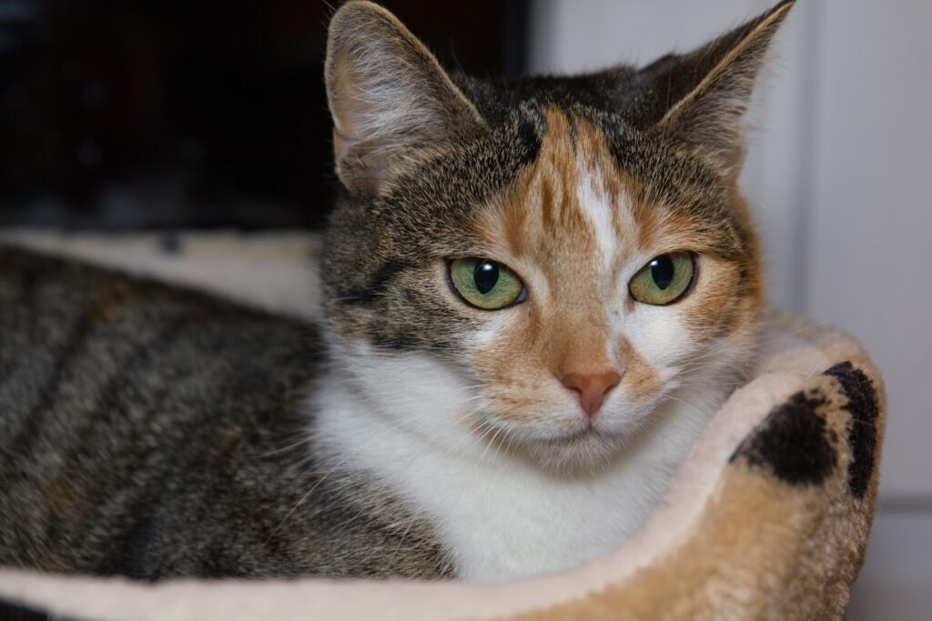 cat 1216178 1920