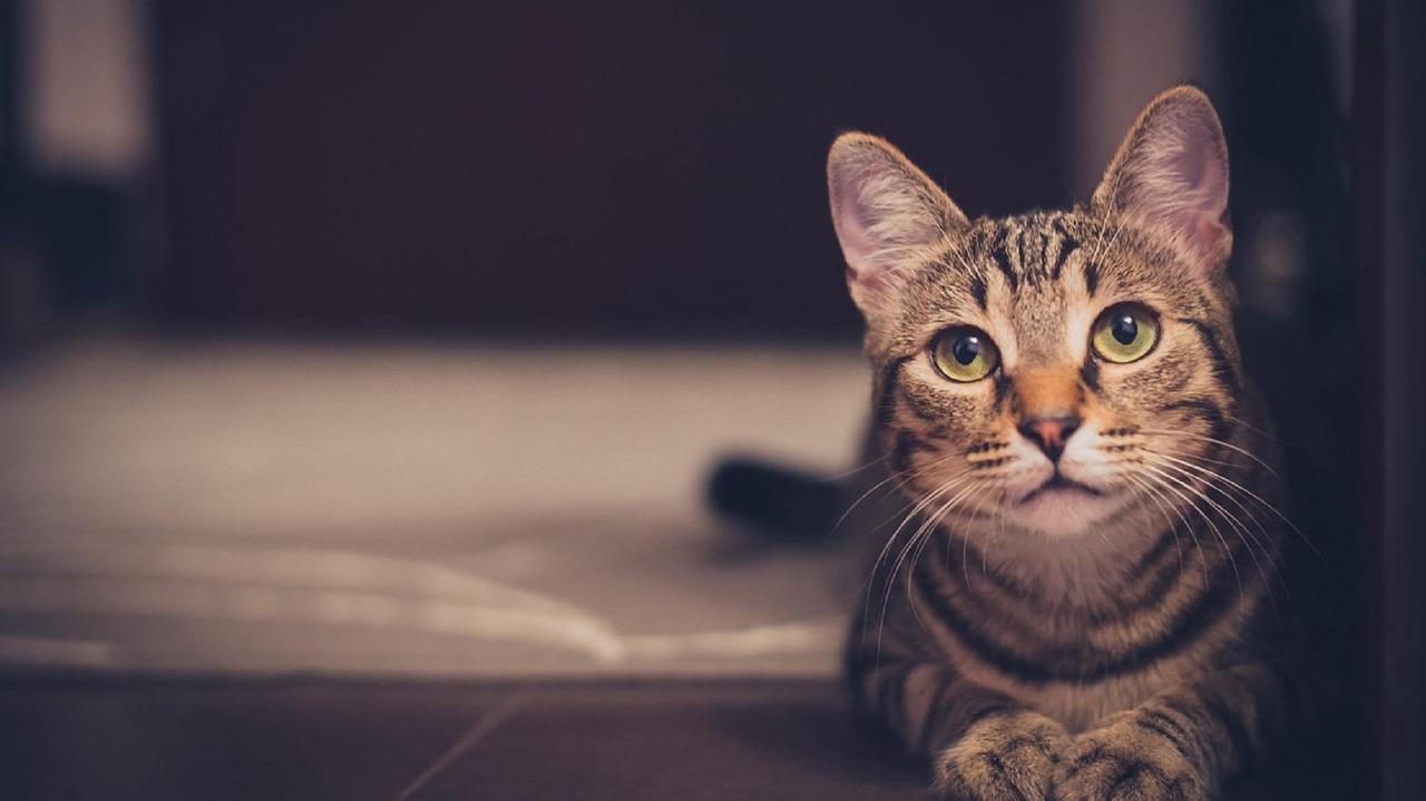 cat 1246736 1280