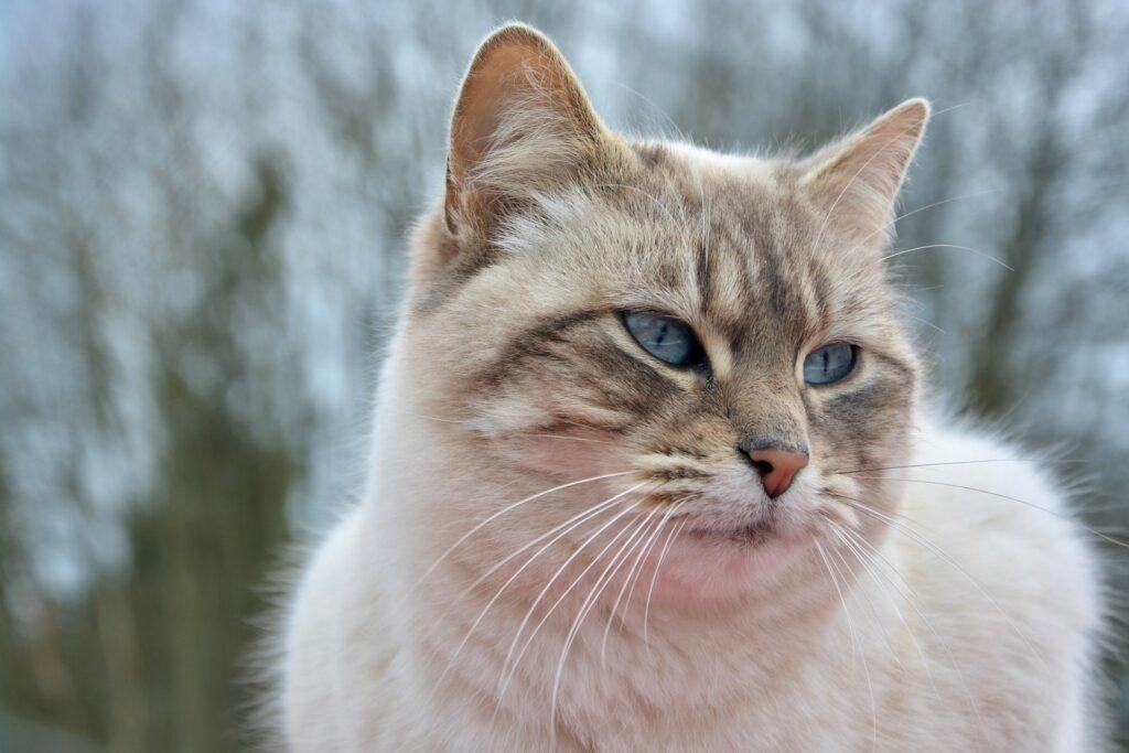 cat 3258166 1920