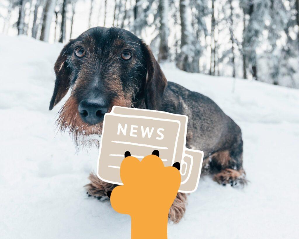 news winter walks