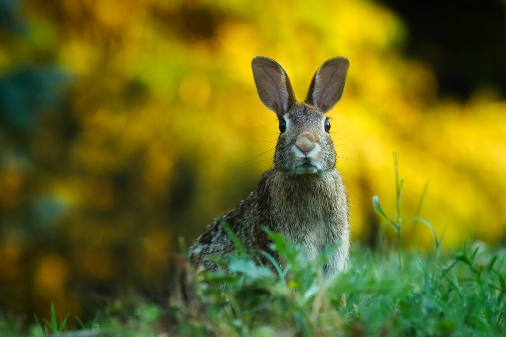 rabbit 1882699 1920