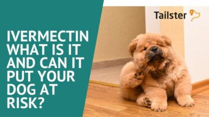 Ivermectin - What Is It And Can It Put Your Dog At Risk?