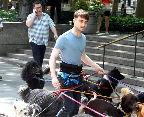 daniel radcliffe turns into a dog walker not the set of trainwreck 1404206787 view 1