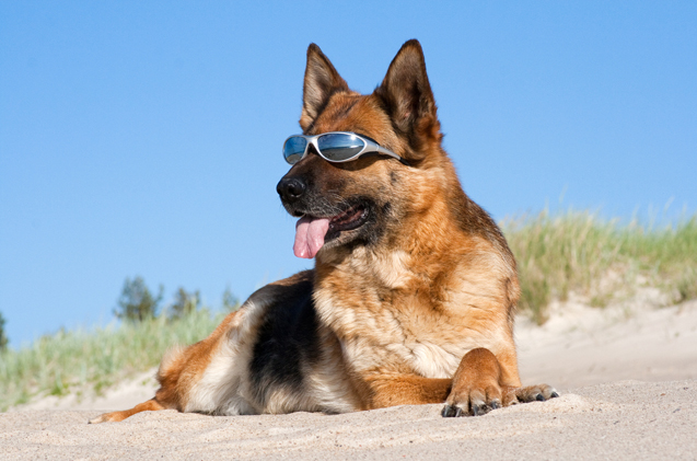 sun protection for dogs1